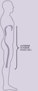 Hier zie je hoe de Anterior Interior Chain door het lichaam loopt